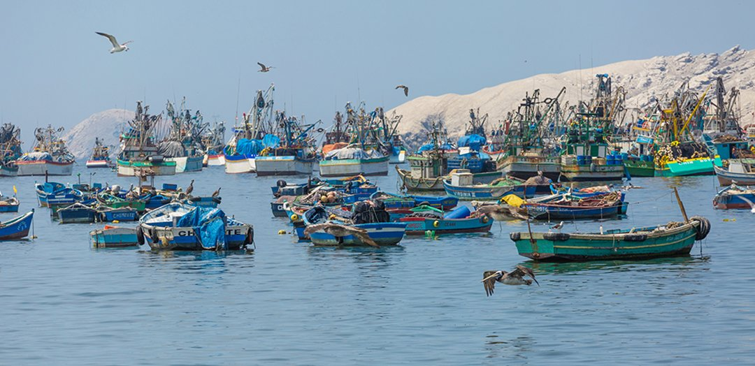 Chimbote fishing boats
